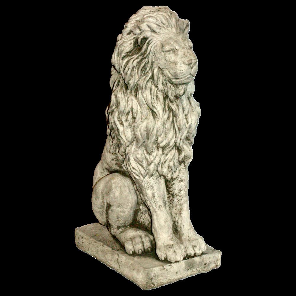 Medium Lion