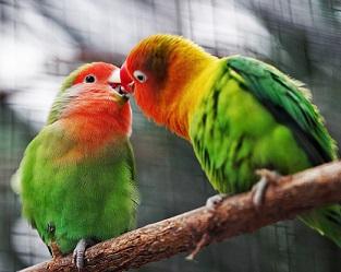 birds jonah-pettrich-549680-unsplash (1).jpg