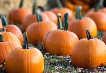 pumpkins jonathan-talbert-530599-unsplash.jpg