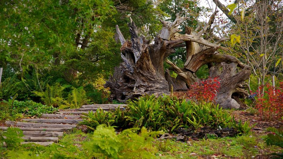 Image of The Morris Arboretum Courtesy of Expedia.com