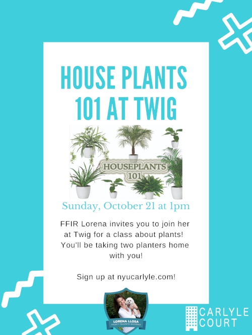 House Plants 101 at Twig.png