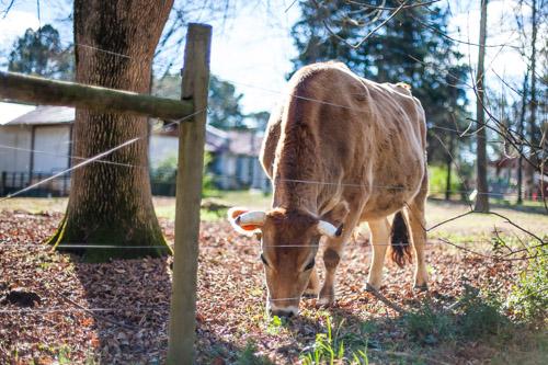 Female Farmer Project _ AudraMulkern10.jpg