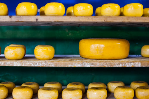 Cheeses curing from a recent cheesemaking workshop