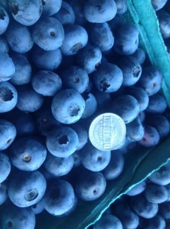 organicblueberries
