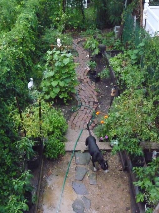 9-new-back-yard-and-garden.jpg