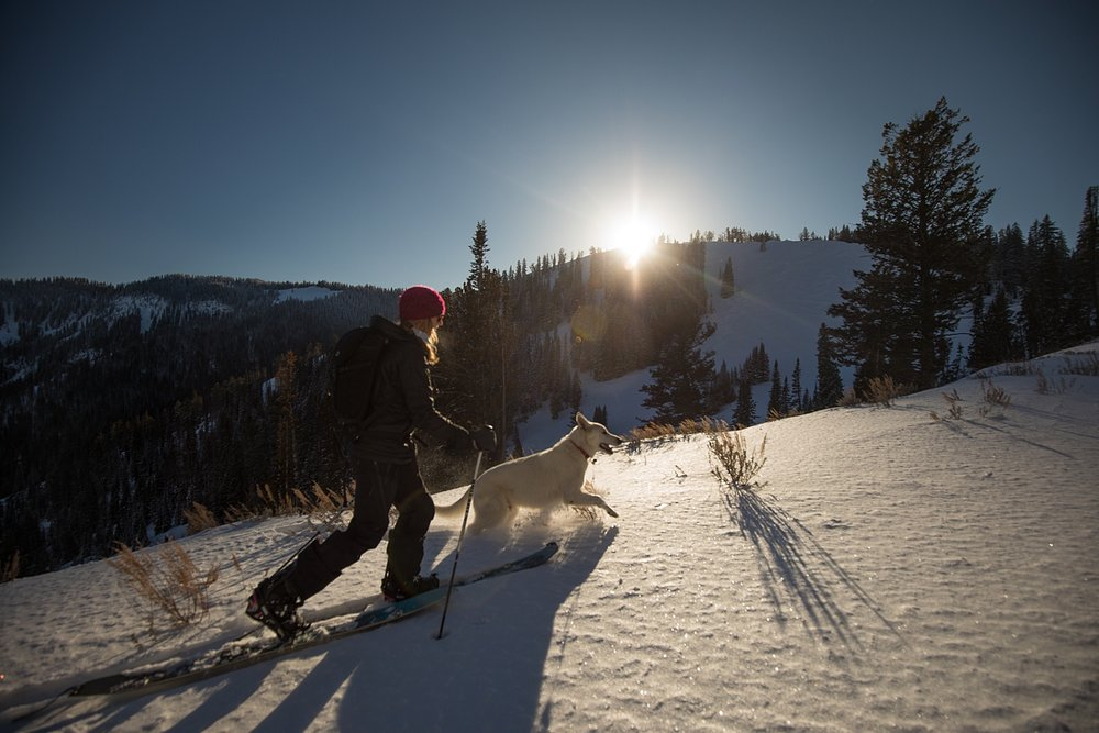 backcountry-jacksonhole.jpg