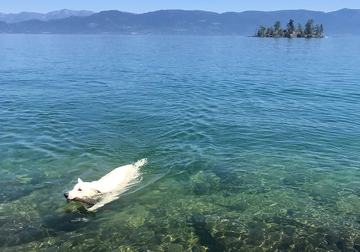 water-whiteshephard.jpg