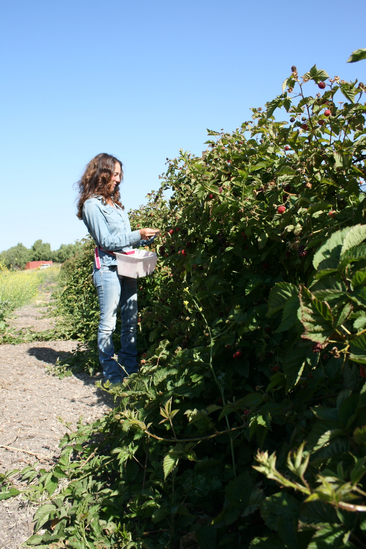 cover-farmers-pic8-6-9.JPG