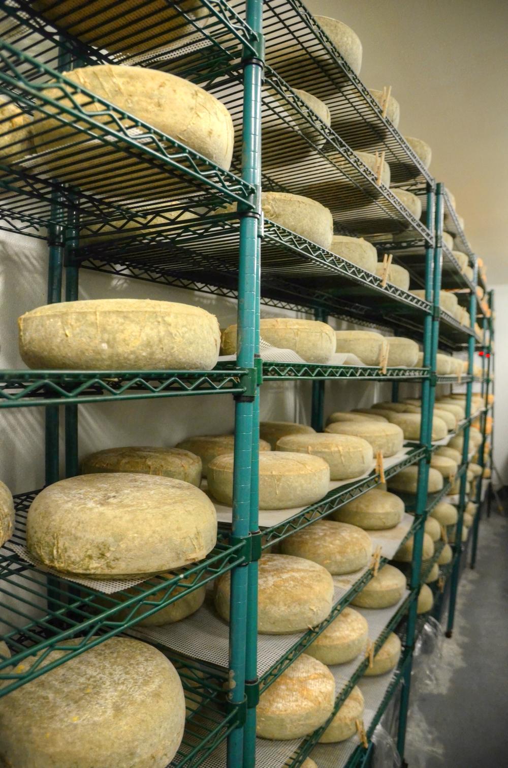 stepladder-cheese_4124.jpg