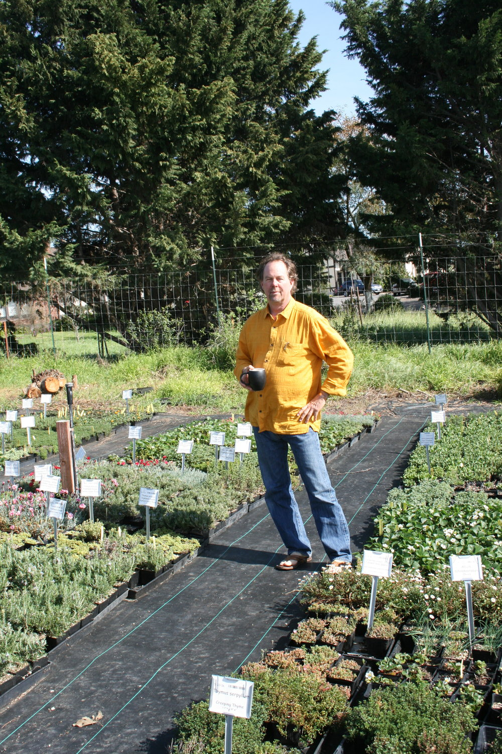 GROWING STRONG     Growing Grounds Farm Program Manager Craig Wilson tends to greenery at the nonprofit's wholesale nursery located in San Luis Obispo off Orcutt Road.    PHOTO BY HAYLEY THOMAS CAIN