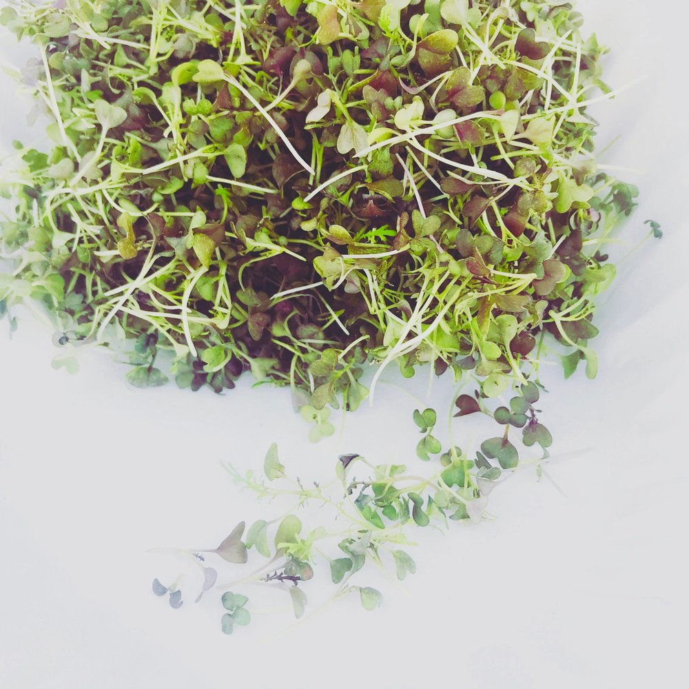 Flavor 2-8 Bloom Microgreens_pic8.jpg