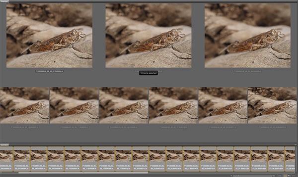 Adobe Bridge window showing files at work
