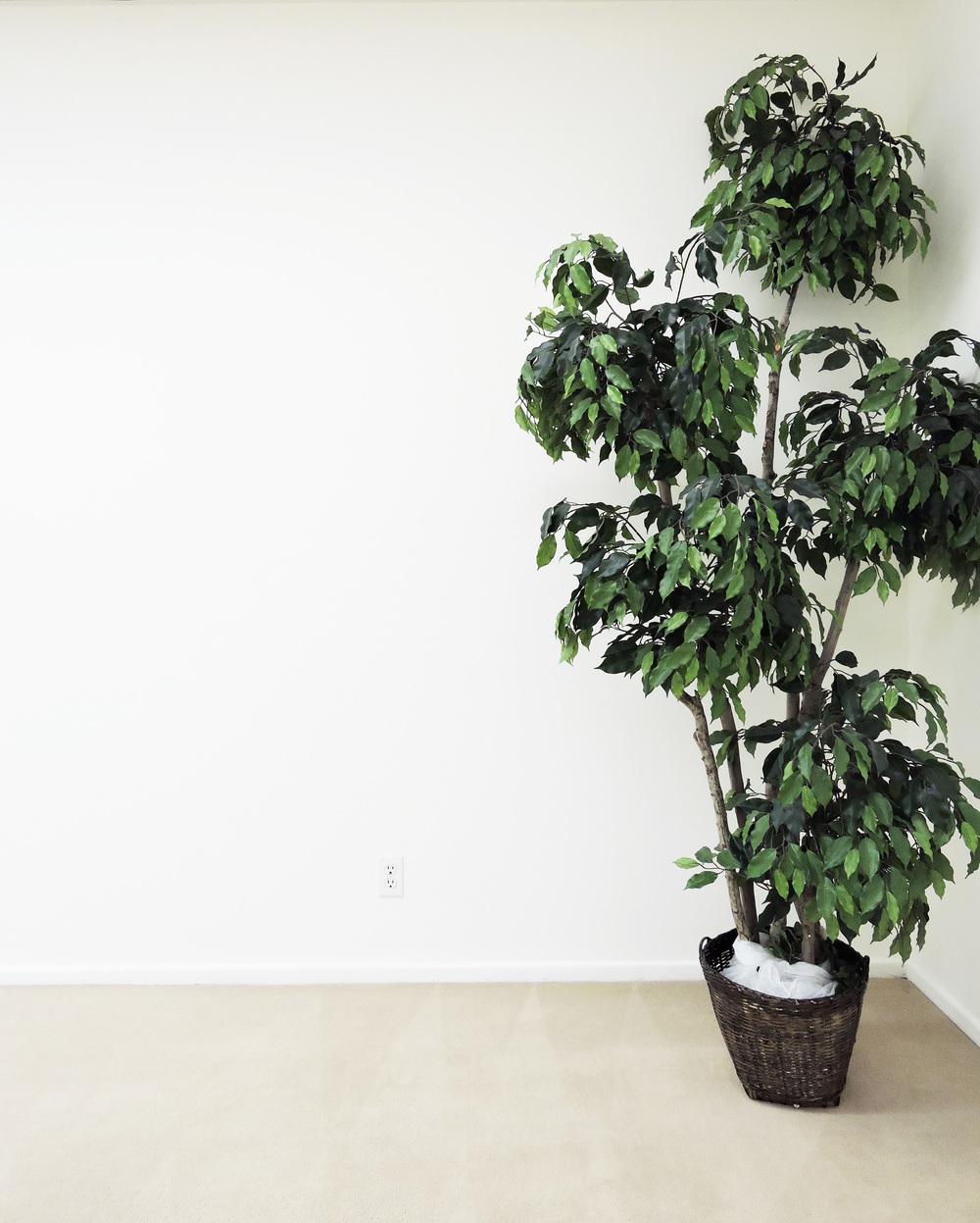238-tree.jpg
