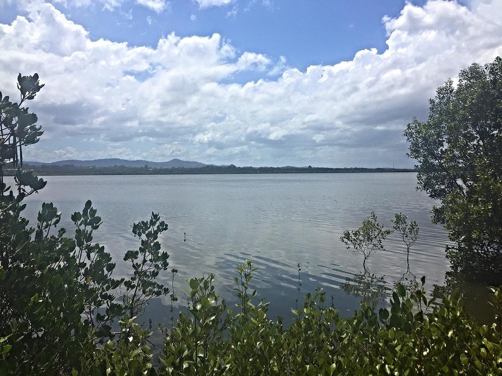 Exploring Coombabah Lakelands.