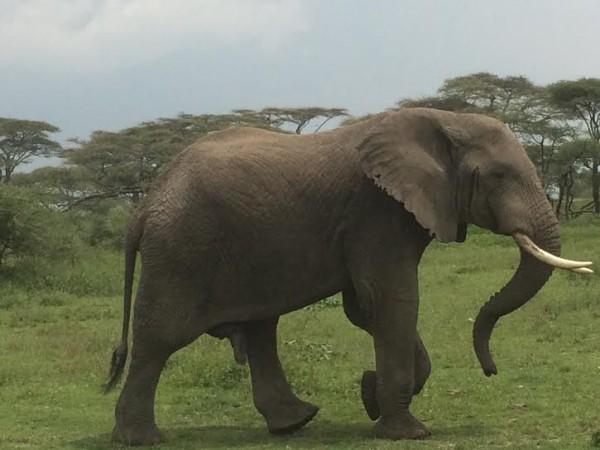 Elephant-2-600x450.jpg