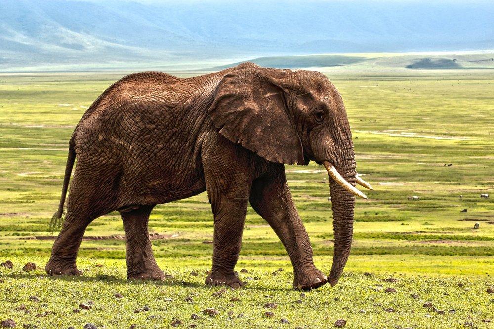 elephant-1421167_1920.jpg