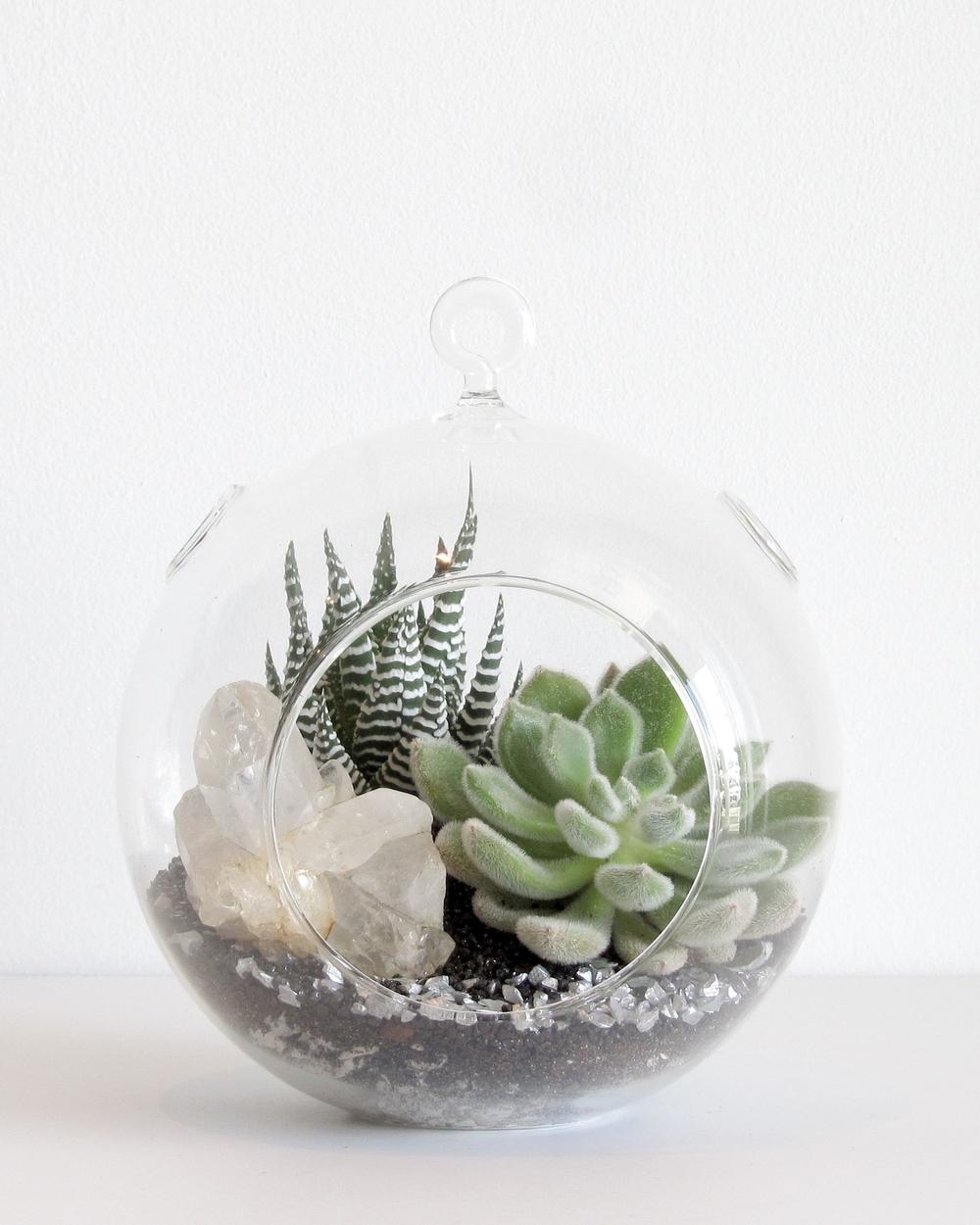 Open Succulent Terrarium