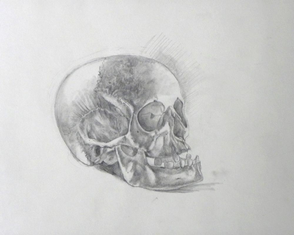 "Skull Study, Graphite on Paper, 11""x11"""