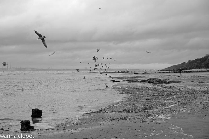 Trouville#beach#winter#gulls