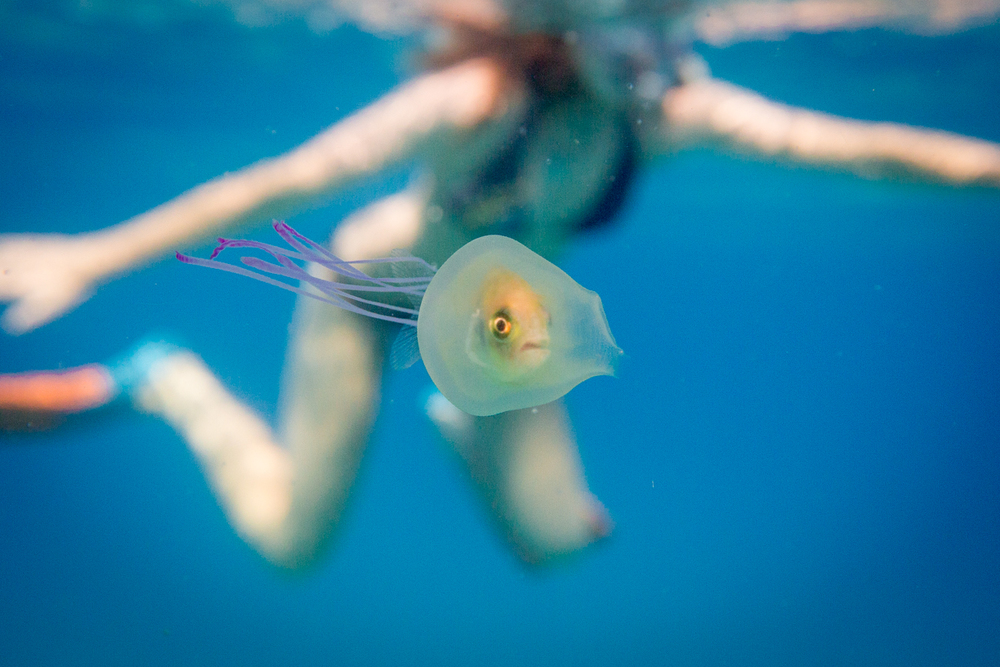 Fish Trapped Inside A Jellyfish