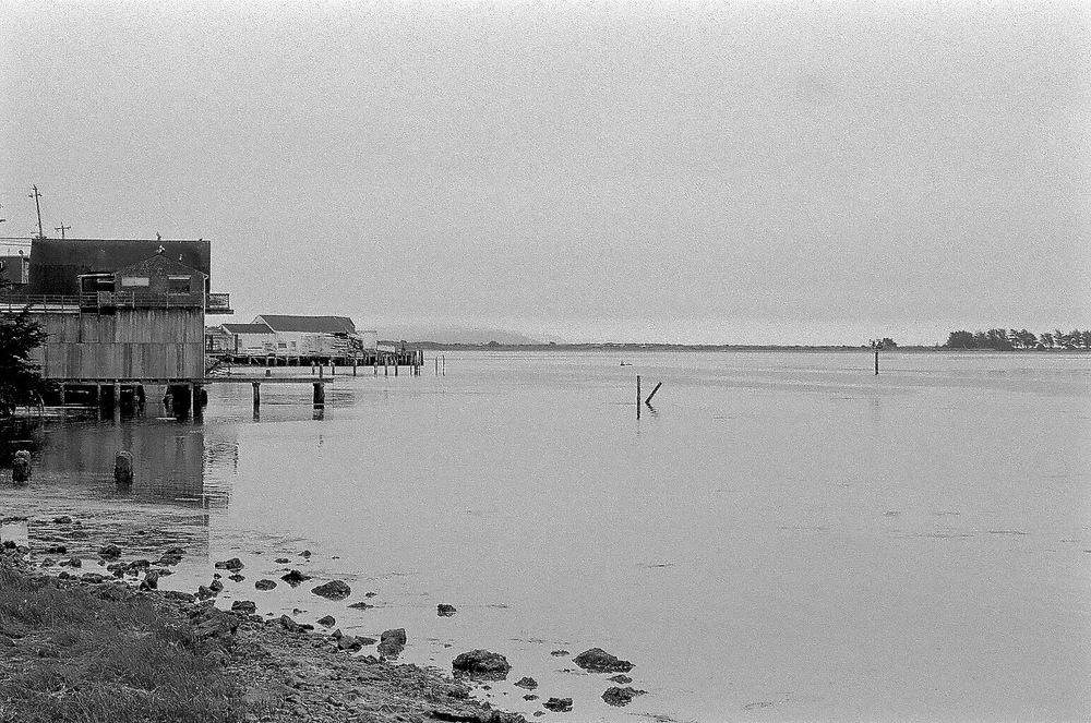 Bodega Bay, Nikon F2A, 85mm f/1.4 Nikkor