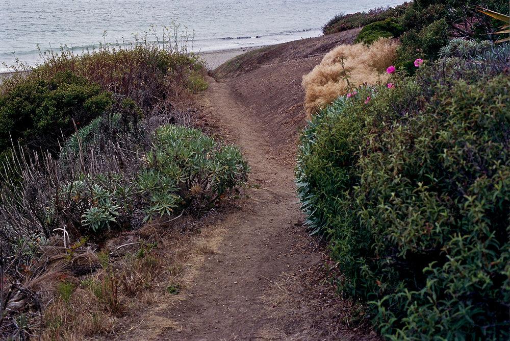 Path to Doran Beach, Olympus OM2n, 50mm f/1.4 Zuiko, Expired Portra 400