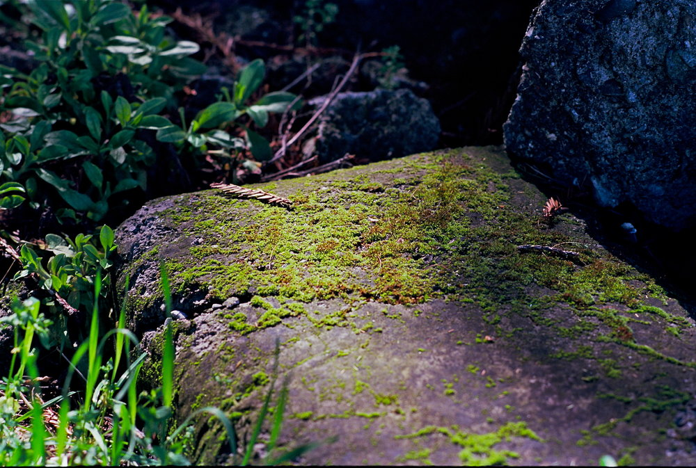 Moss on rock/Boho Cottage, Freestone CA 2014