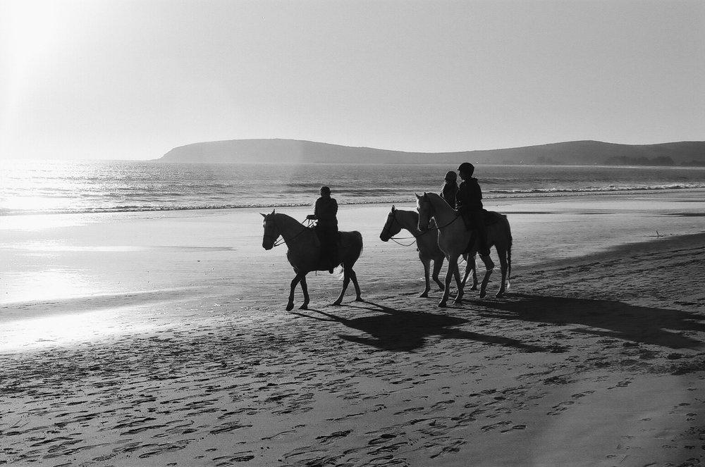 Doran Horses.jpg