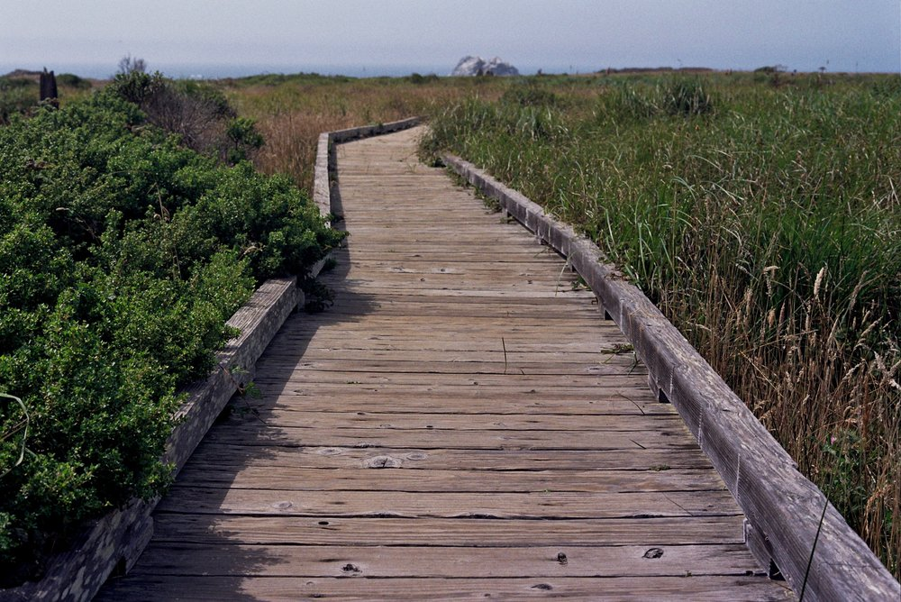 To protect sensitive wetland areas, parts of the trail feature elevated boardwalks.