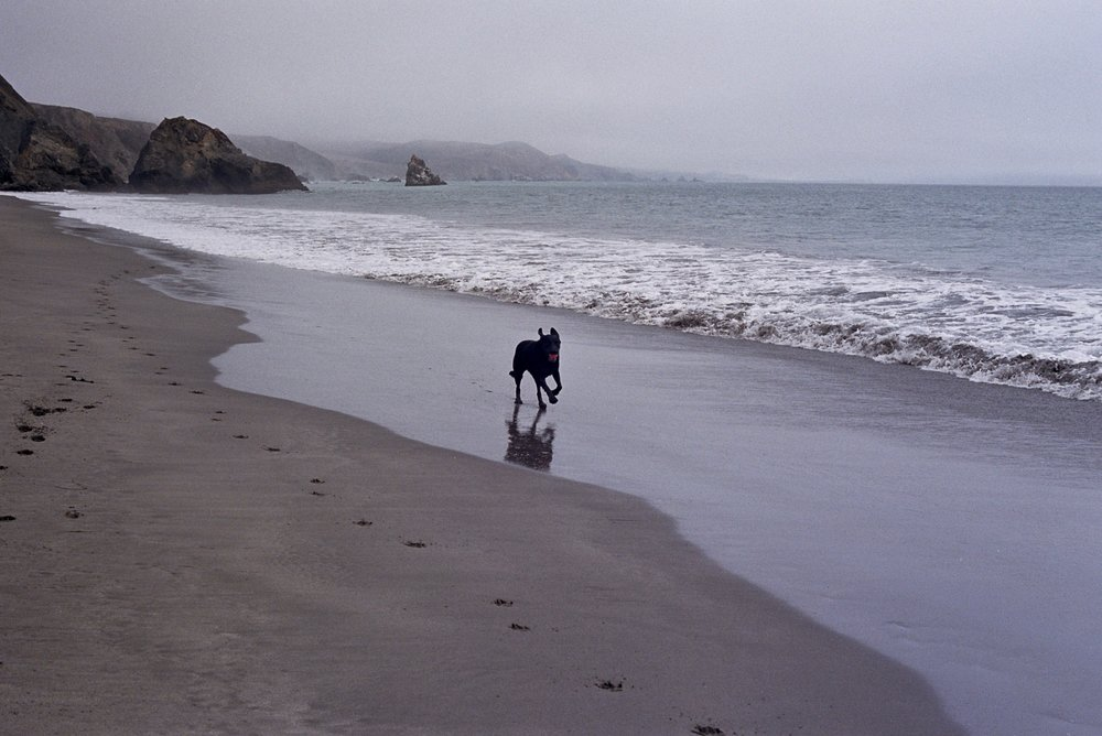 Even on a gloomy day, a dog will make the most of it. Pentax Spotmatic, 50mm f/1.4 8-element Super Takumar, Portra 400