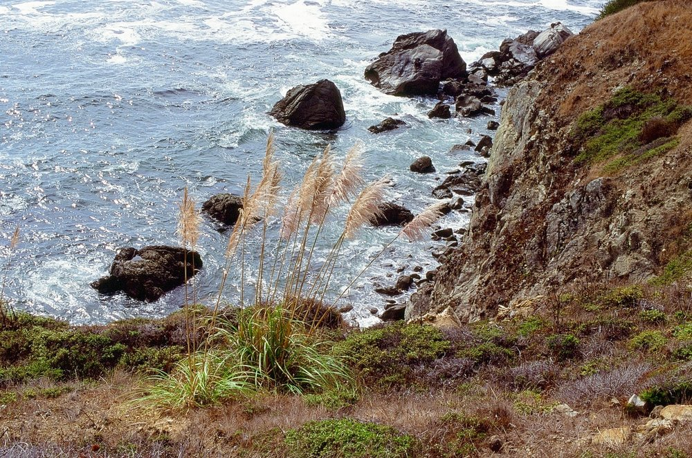 Near Fort Ross, CA.  Pentax ME, SMC Pentax-M 50mm f/1.7 on Velvia slide film