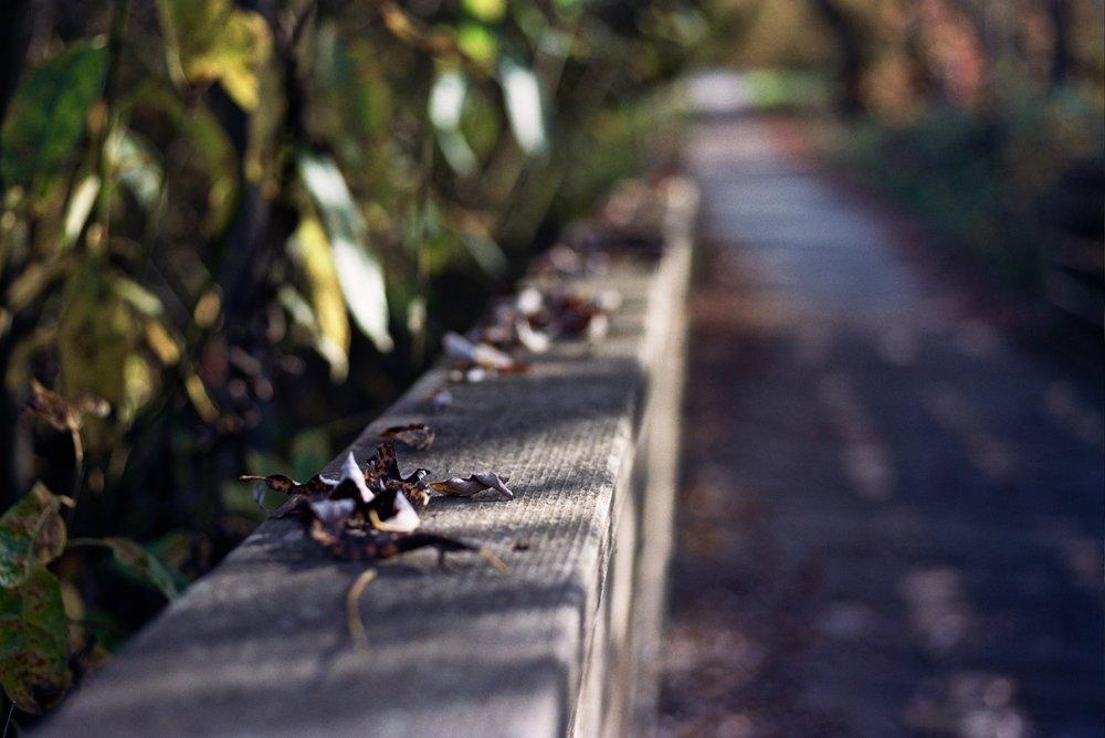 Near Sebastopol, CA. Nikon FM2n, 55mm f/2.8 Micro-Nikkor, Portra 400