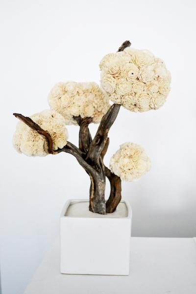 Com14-Balsa wood tree-Fairmont Miramar.jpg