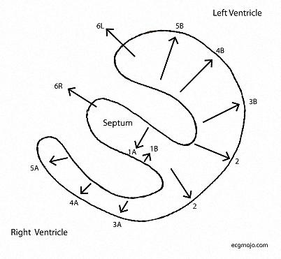 Figure_10. Sequential ventricular depolarization vectors in the horizontal plane.
