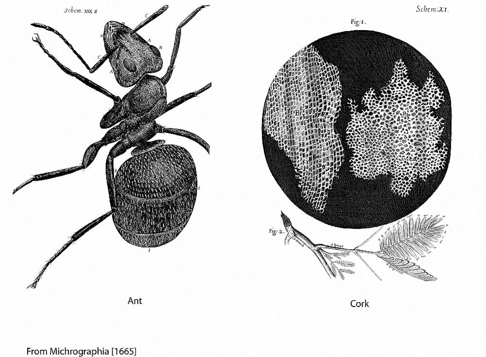 Figure 5 Micrographia 2