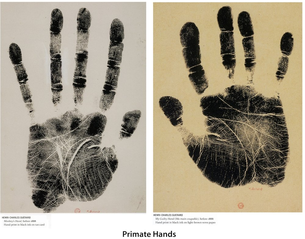 Figure 5.  Primate Fingerprints