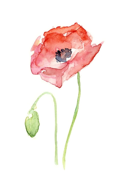 red-poppy-olga-shvartsur.jpg