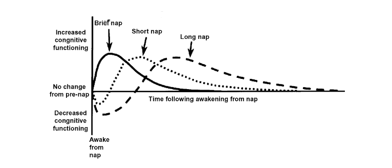 This diagram depicts this effect; a brief nap being about 20 minutes, short being under an hour, and long being over an hour.