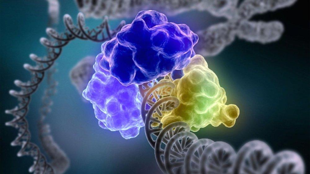 CRISPR - The Double-Edged Sword of Genetic Engineering