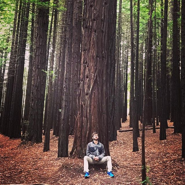 In my #happyplace where we took attendees from the  #ReconnectionRetreat2018 for a sacred #site visit.. Full photos etc on my FB feed ❤️ so much love and connection  #meditation #redwoods #nature #connection #silence #stillness #zen #whoami #life #wonder #breathe #deepbreath #melbourne #yoga #yogislife #yogi #yogisofinstagram #yogamelbourne #retreatsmelbourne
