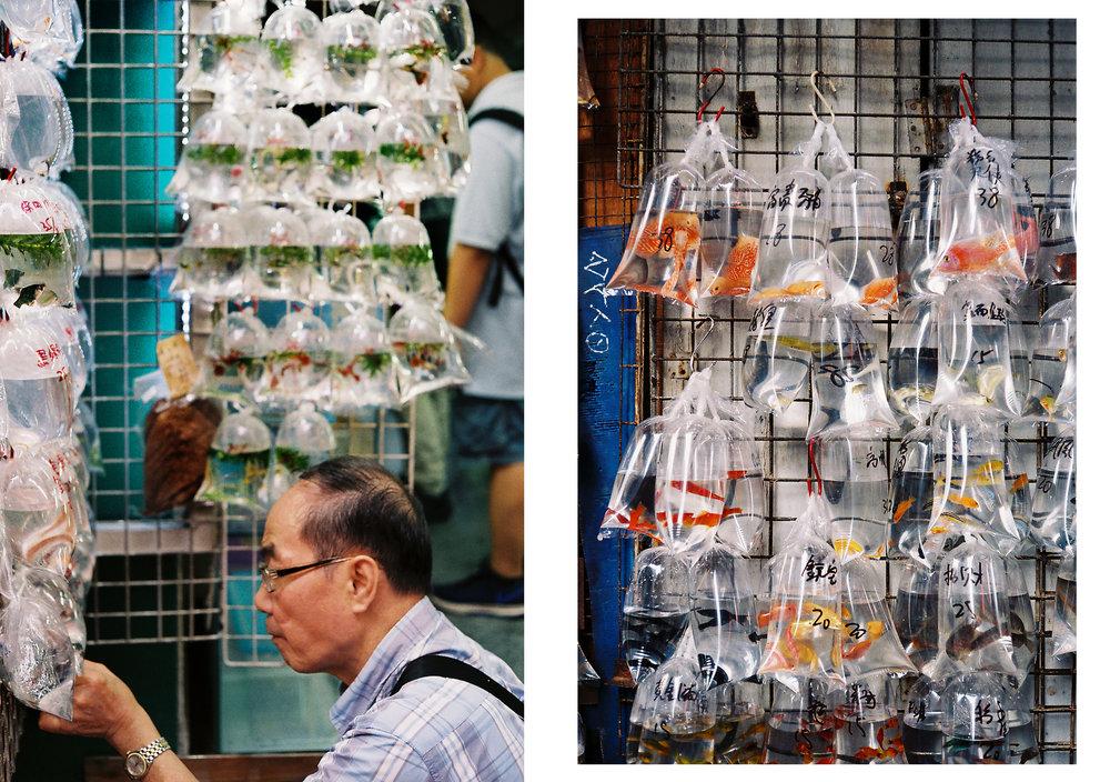 Hong Kong diptic