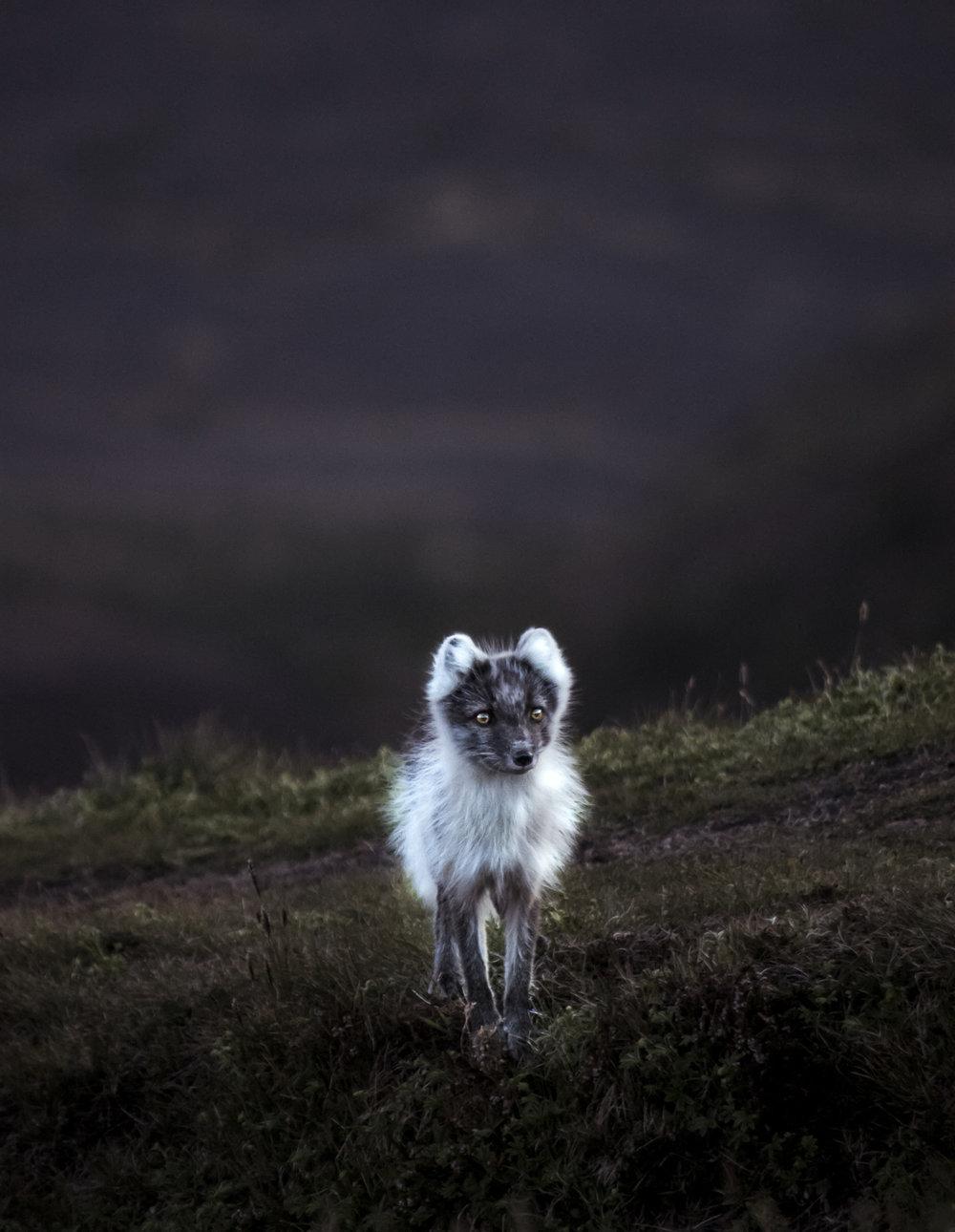 foxy-4930.jpg