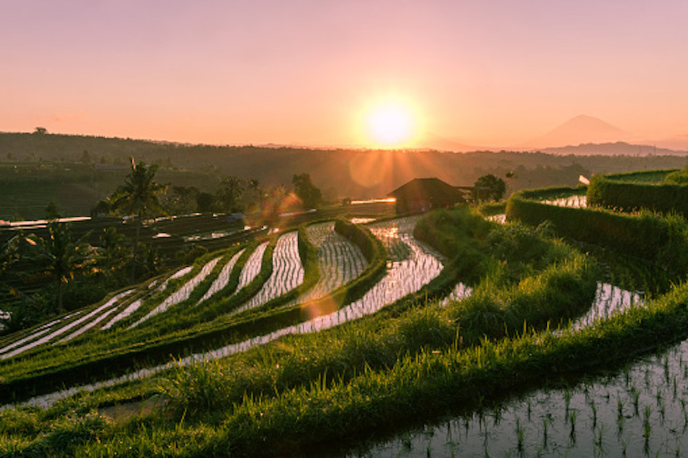 UNESCO's World Heritage, Jatiluwih Rice Terraces