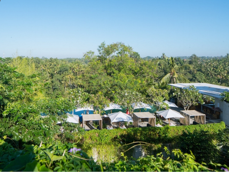 Ubud Jungle View.jpg