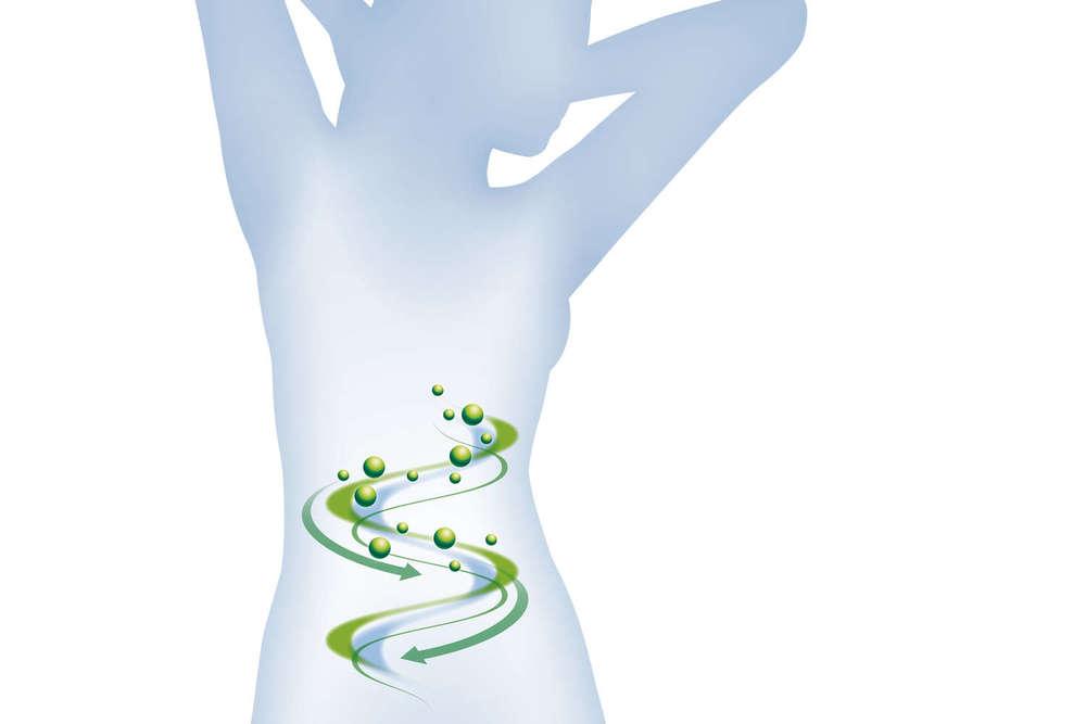 Unser Darm:  die Wiege des Immunsystems