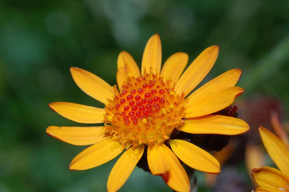Homöopathie  Zurück zur Lebenskraft mit der Intelligenz der Natur