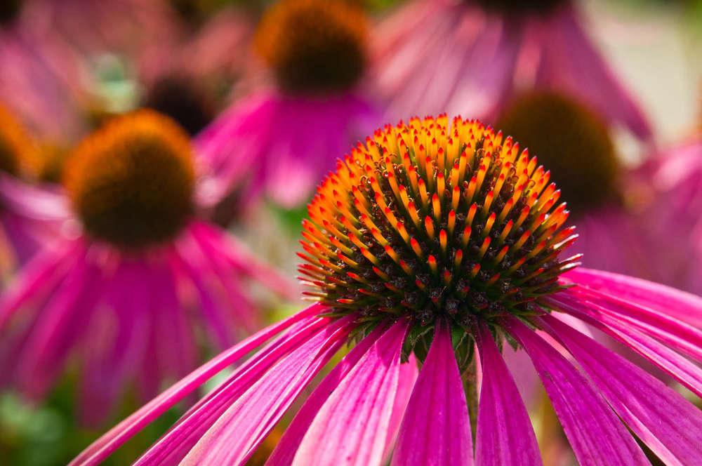 """""""Phytotherapie""""  kommt aus dem Griechischen und bedeutet soviel wie """"mit Pflanzen heilen"""""""