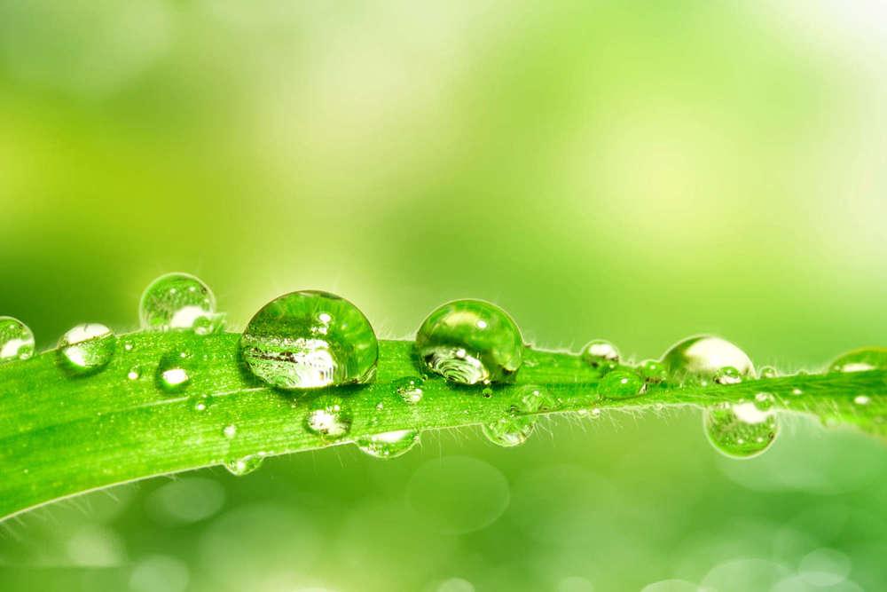 """""""Die wirksamste Medizin ist die natürliche Heilkraft,die im Inneren eines jeden von uns liegt""""   (Hippokrates von Kos)"""