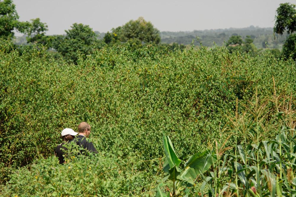 Ugandan pastor Rev. Raymond Kaija showing Rev. Jonathan Clausing a cassava field.