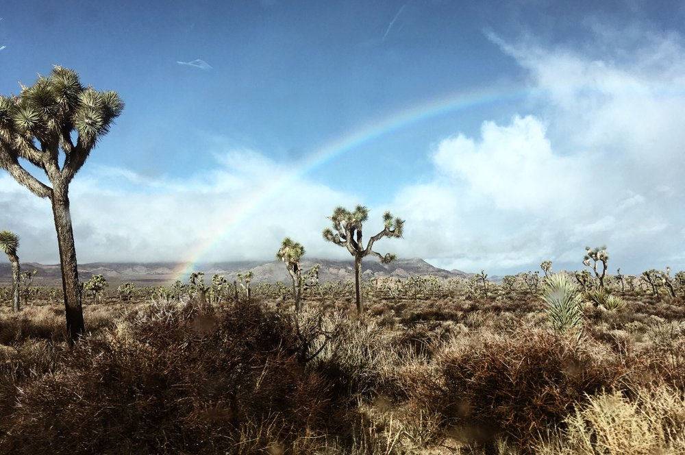Insane morning scenes after a rainy night camping in Joshua Tree National Park